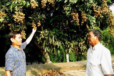Xuất khẩu trái cây có triển vọng đạt kim ngạch 10 tỷ USD