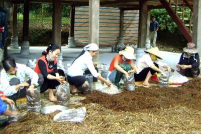 Văn Chấn (Yên Bái): Đào tạo nghề gắn với giới thiệu việc làm