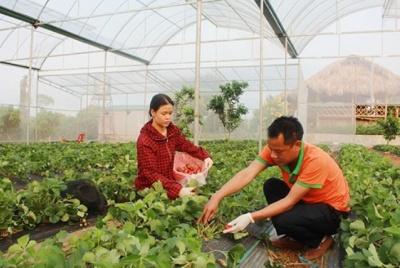 Huyện Mai Sơn: Nỗ lực giải quyết việc làm cho  người lao động