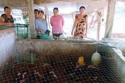 Lao động nông thôn qua đào tạo nghề ở Bạc Liêu: Vẫn khó sống bằng nghề